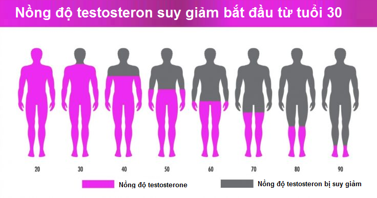 Suy giảm hormon testosteron gây xuất tinh sớm